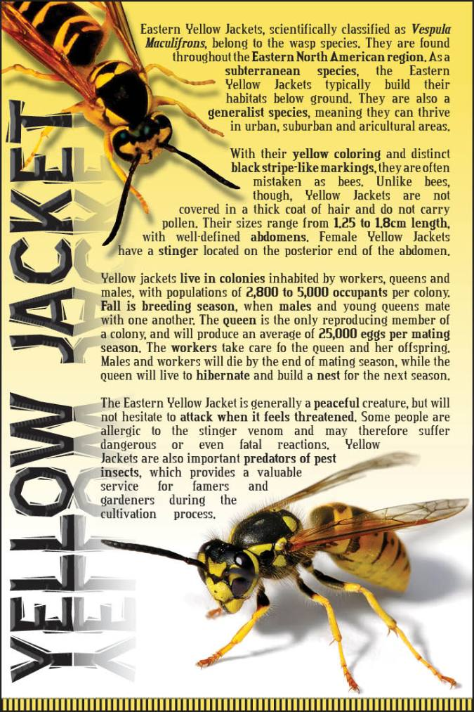 Yellow Jacket insect poster
